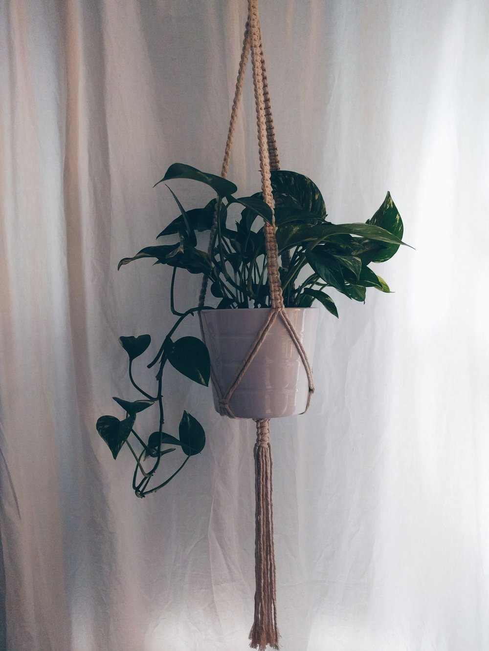 classic single plant hanger.jpg