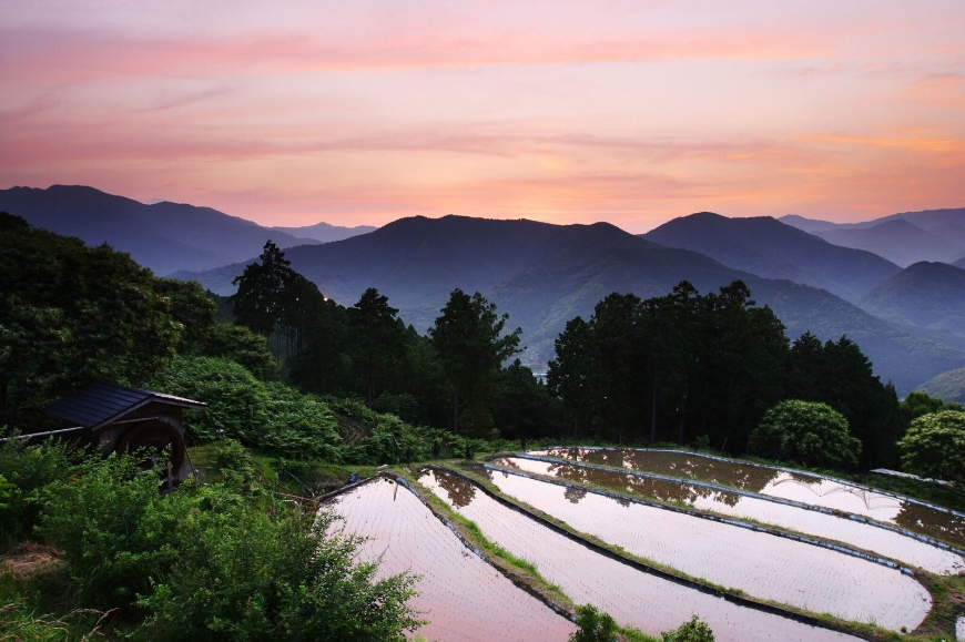 The Kii Mountains at dusk. The Kumano Kodo is an 11th-century pilgrimage route that takes modern-day hikers through dense old-growth forests that open onto vistas of tea terraces and mist-shrouded peaks. (Photo courtesy Tanabe City Kumano Tourism Bureau)