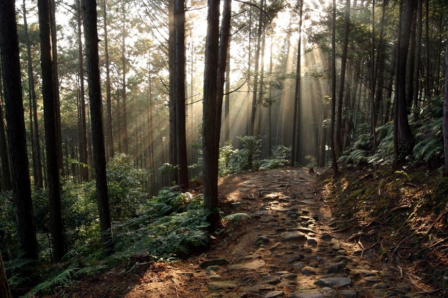 Early morning on the Kumano Kodo. (Photo courtesy Tanabe City Kumano Tourism Bureau)