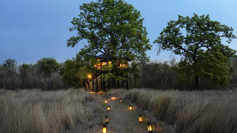 Worth traveling for: PEnch Tree Lodge, india - Here Magazine