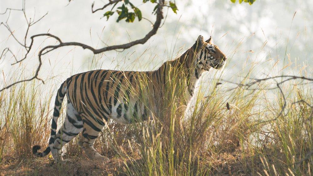 this incredible safari is the real-life jungle book - Fodor's Travel