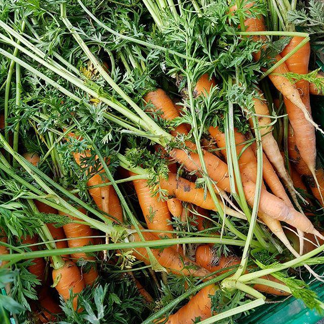 Husk utlevering på Stasjonskafeen i dag! I dag er det både neper og gulrøtter og jordskokk og svartkål og masse annet økologisk snæcks fra Linnestad gård i posen! 😊