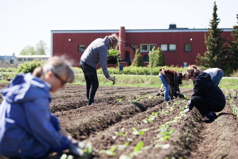 Dysterjordet andelslandbruk  Dysterjordet andelslandbruk holder til i Ås sentrum med 150 andelshavere. Produksjonen drives etter økologiske retningslinjer, organisert av en ansvarlig gartner. Andelshaverne bidrar med grønnsaksdyrkingen og høster grønnsaker til eget bruk. Ås kooperativ kjøper i blant overskuddsgrønnsaker slik at de ikke går til spille.