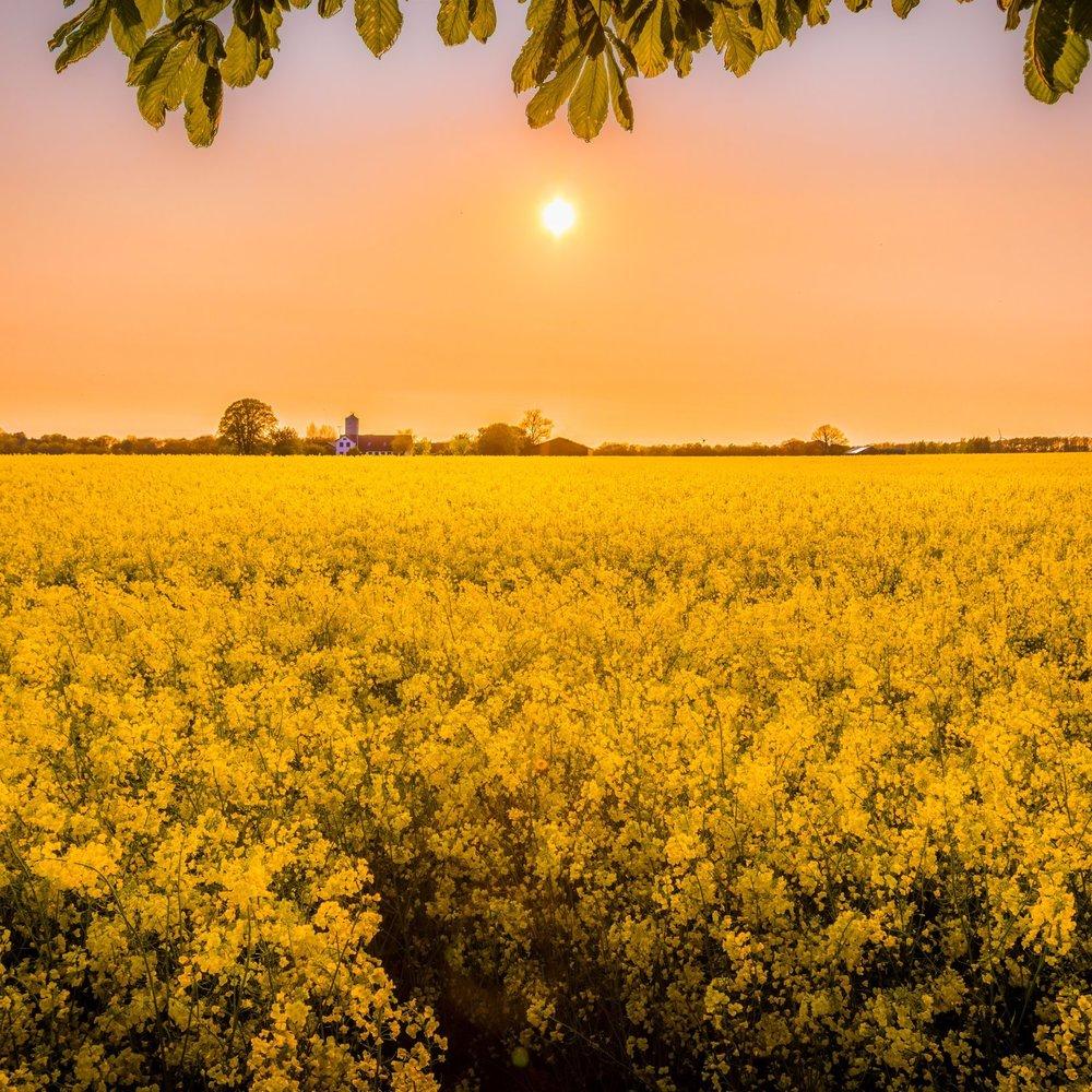 Brem veld - Photo by Mantas Hesthaven on Unsplash.jpg