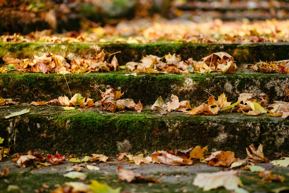 autumn-leaves-blur-close-up-204867 (1).jpg