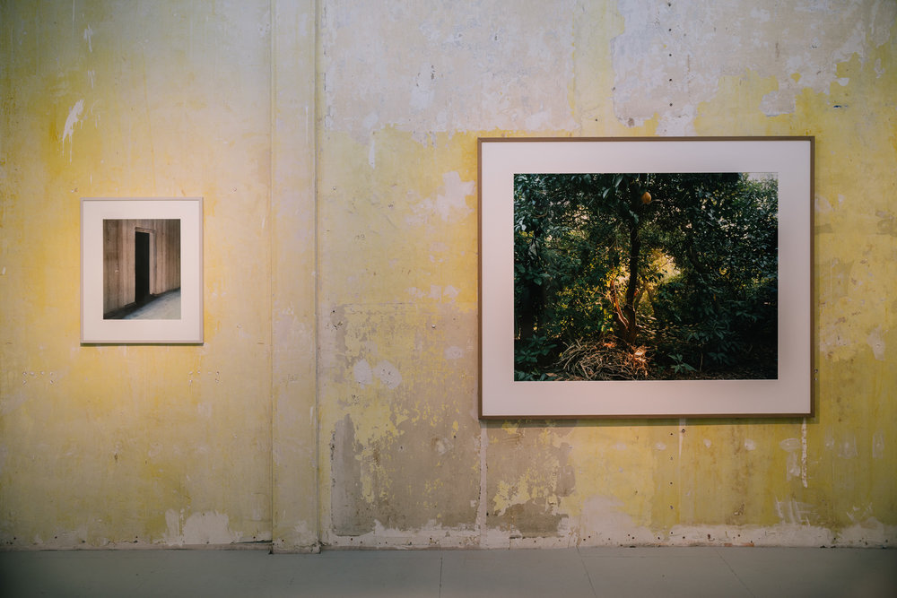 Laurenz Berges  Wünsdorf III, 1994.  Simone Nieweg  Grapefruit, Spinnweben und Reisighaufen, Grand  Terrace, Kalifornien 2014