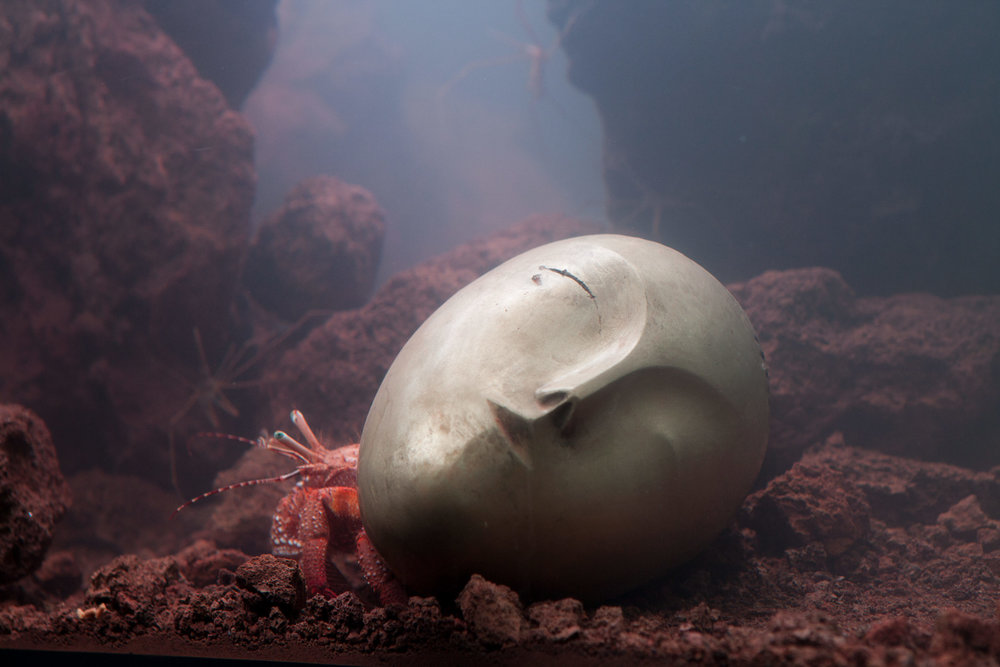 Pierre Huyghe's Recollection  Giant Hermit Crab residing in a replica of Brancussi's Sleeping Muse