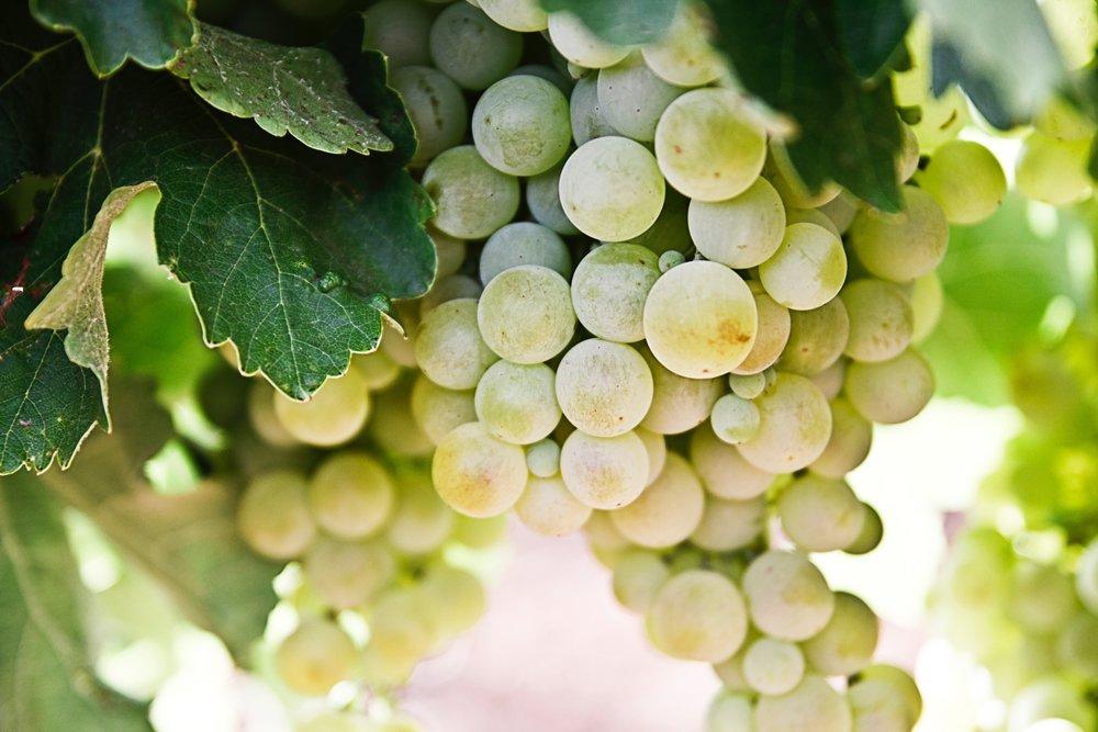Tipp 5 - Weintrauben statt Eiswürfel