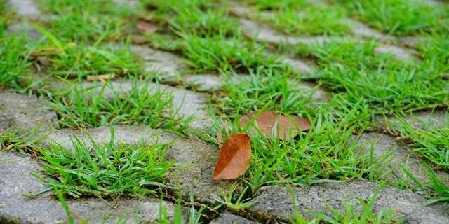 - Asfaltové plochy se při teplotě kolem 30° C rozžhaví na 60° C jako nic. Celkově se tak zvyšuje teplota vzduchu na místě.Chápeme, že pokládat asfalt je levné, rychlé a na vozovkách nutné. Ale parkovací místa mohou být vydlážděna průsakovými dlaždicemi. Tak se okolní teplota sníží, a navíc se odvede cenná dešťová voda pod zem a neodteče zbytečně do kanalizace.Zatravňovací dlaždice
