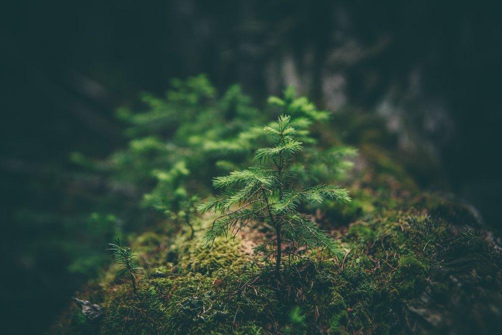 - Monokulturní lesy budou mít v nejbližších 10 letech velký problém se suchem a následně i s kůrovcem. Navíc na Šumavě platí, kde nejsou lesy, tam bývá sucho. Potřebujeme co nejrychleji začít s lesnickými opatřeními, která vimperské lesy na sucho i kůrovce připraví co nejlépe. Nejde totiž jen o lesy,ale stejně důležité je i množství spodní vody.Převážně smrkové lesy v okolí Vimperka představují riziko kvůli kůrovci a suchu