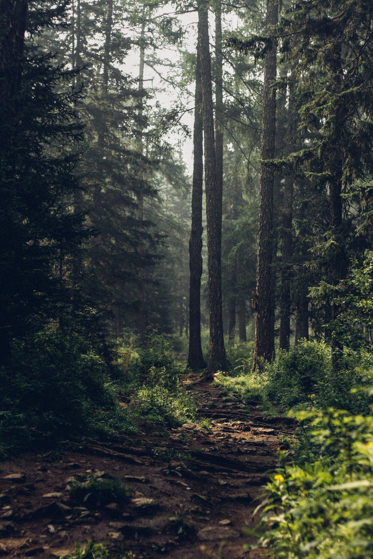 Lesy připravené na kalamity - Kůrovcová kalamita bude podle odborníků, kteří viděli naše lesy, do 10ti let i ve Vimperku. Vliv na to mají hlavně postupující suchoa místní smrková monokultura.Město má v lesích značný majetek. Navíc by bez nich Vimperk přišel o kus své šumavské identity.Takové situaci můžeme předejít. Už teď je třeba začít provádět lesnická opatření, která naše lesy posílí a připraví je na příchod sucha i kůrovce. Otázka přežití našich lesů je úzce spojená s otázkou, kolik bude v krajině kolem Vimperka spodní vody.Lesy v dobré kondici a dostatečné množství spodní vody jsou životní témata nejen pro nás, ale i pro budoucí generace Vimperáků.Silnější a odolnější lesy jsou pro Vimperk životně důležité.Tak jo!