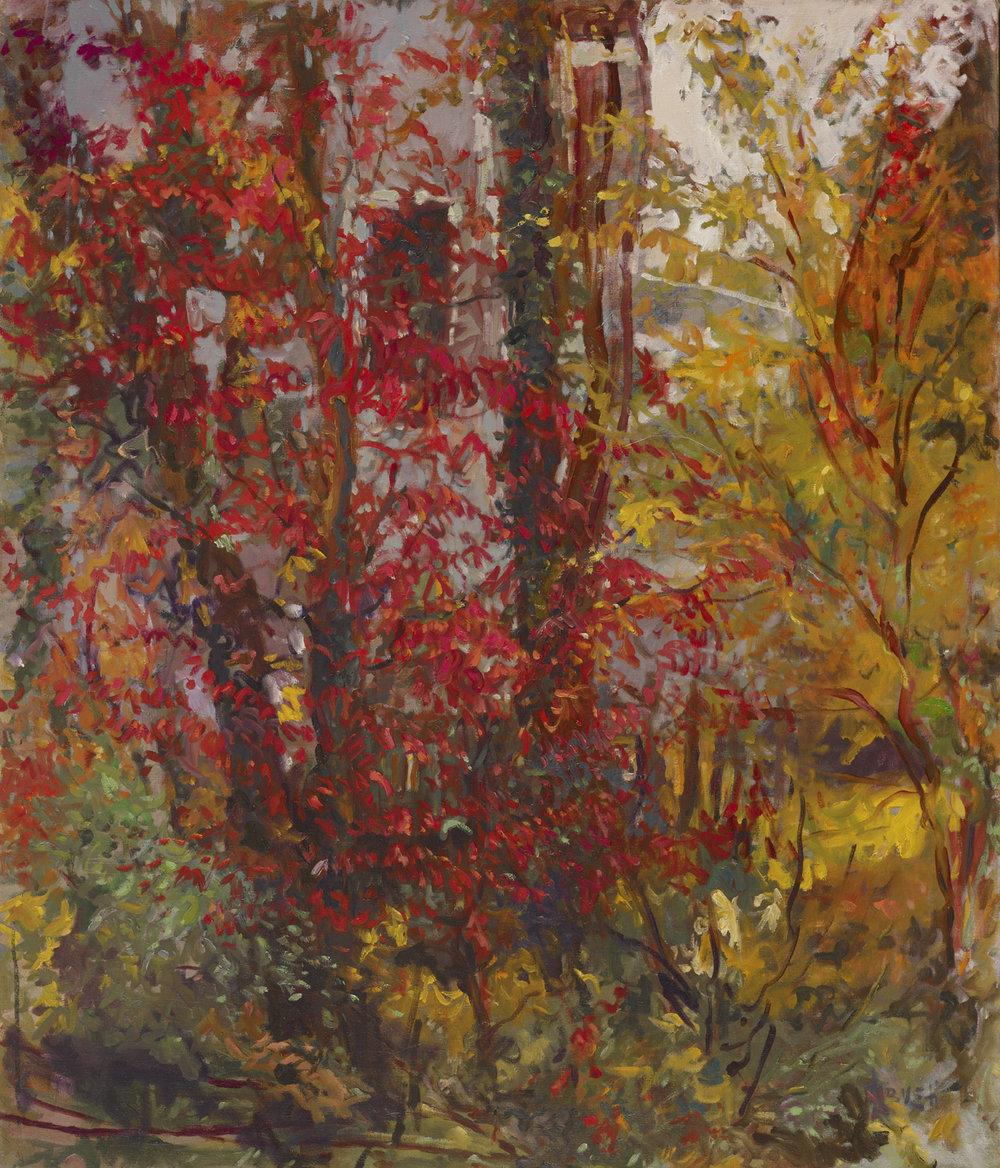 Fire Bush  34x29 - Oil on Canvas