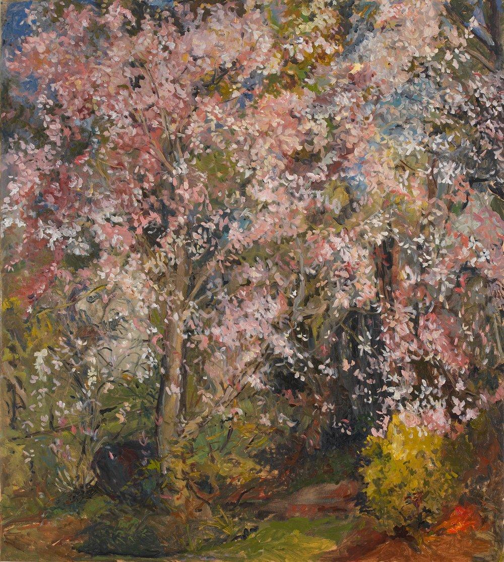 Magnolia in Full Bloom 34X38 - Oil on Linen