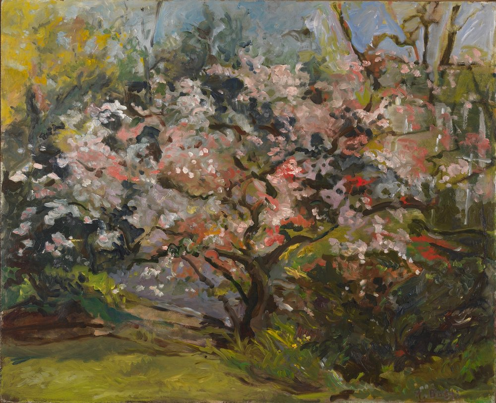 Cherry Tree at Dusk  25X27 - Oil on Board