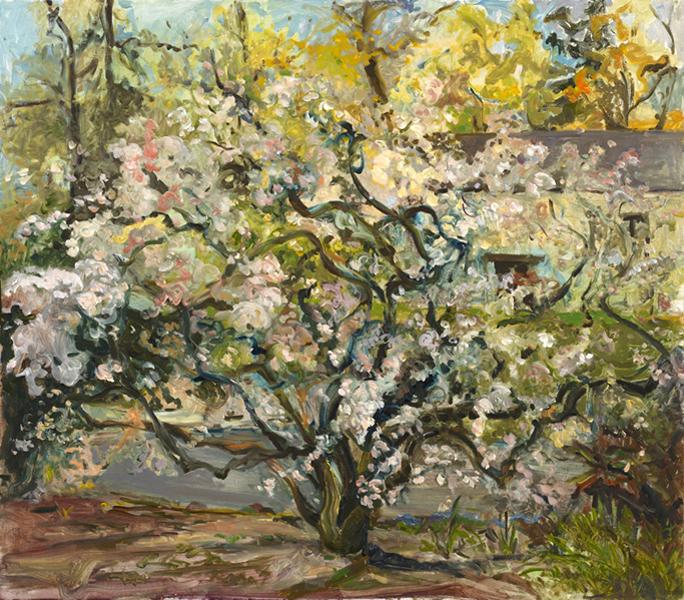 Old Cherry Tree  30x34 oil on linen