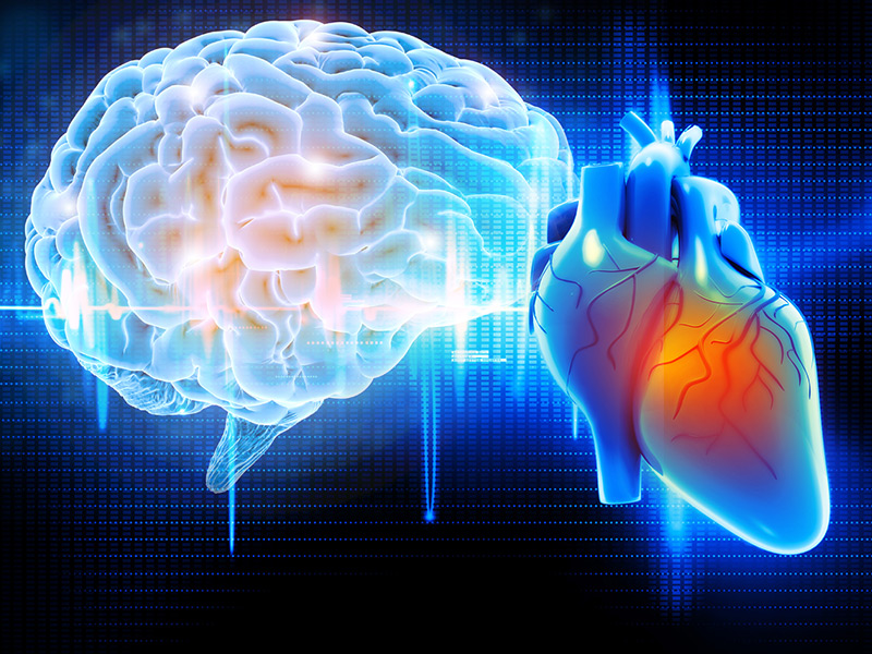 "Neurocardiologists have discovered that there is literally a brain in the heart – that the heart itself is a brain. - They have found that an amazing 60 - 65 % of heart cells are neural cells like those in your brain. These cells are clustered in groups, or ganglia, just like the neural groupings of the brain, and the same neurotransmitters function in both places. These connections provide the pathway of nonstop, direct dialogue – or resonance – between our head and heart. In addition, the heart's ganglia connect to many other tiny ganglia, or ""nonlocalized brains"", scattered throughout the body. The ""heartbrain"" communicates within the body neurally, hormonally, and energetically."