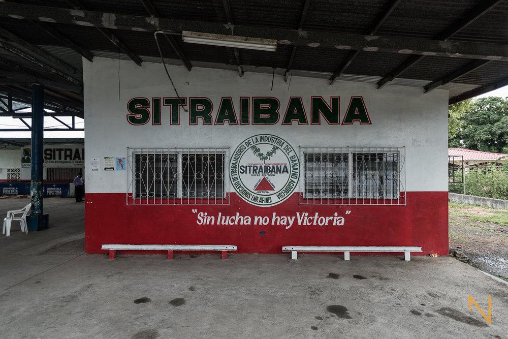 Los sindicatos de empresas bananeras independientes en Changuinola, Bocas del Toro.