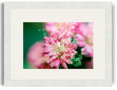 Khanh Hmoong Pink and White 8x12 White Frame White Mat.jpg