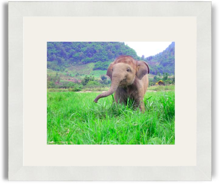 Rachel Bradley Baby Elephant White Frame White Mat.png