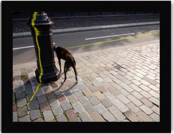 Marco Giusfredi Untitled Print Dog Black Frame No Mat.png.jpg
