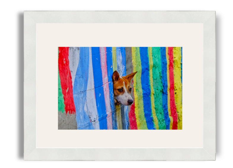 Agus Aminullah The Dog White Frame White Mat.png