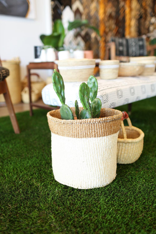 cactus on grass rug.jpg