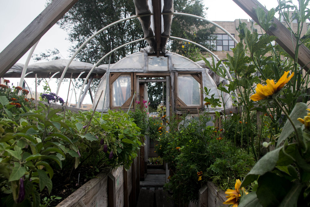 The rooftop garden sits directly on top of the restaurant. Built in 2009, the garden provides chefs with fruits, vegetables, herbs and flowers such as chocolate mint, purple basil, blueberries and corn.