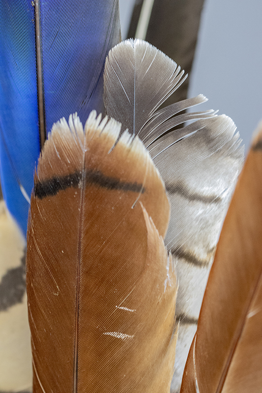 Assorted Feathers small.jpg