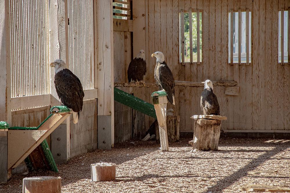 Eagle Group small.jpg