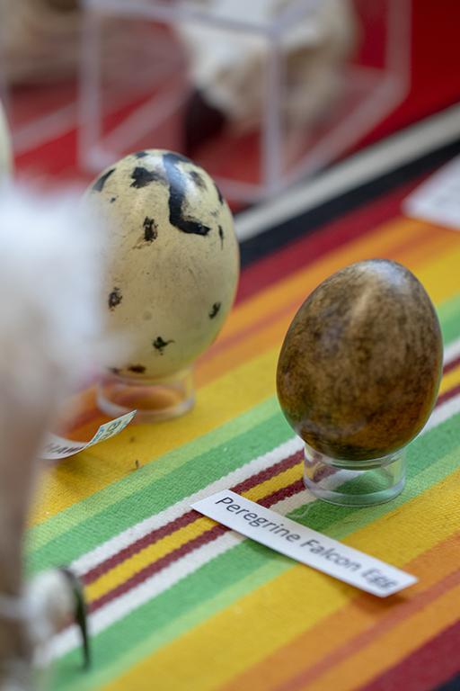 Egg smal.jpg