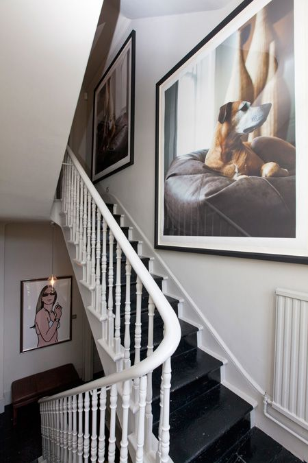 pet portrait wall