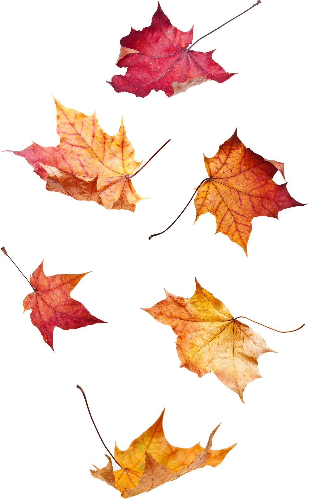 fall_leaves_isolated2.jpg