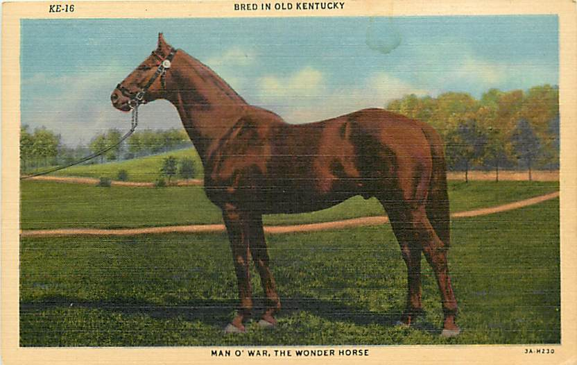 Man o' War, considered one of the greatest Thoroughbred racehorses of all time