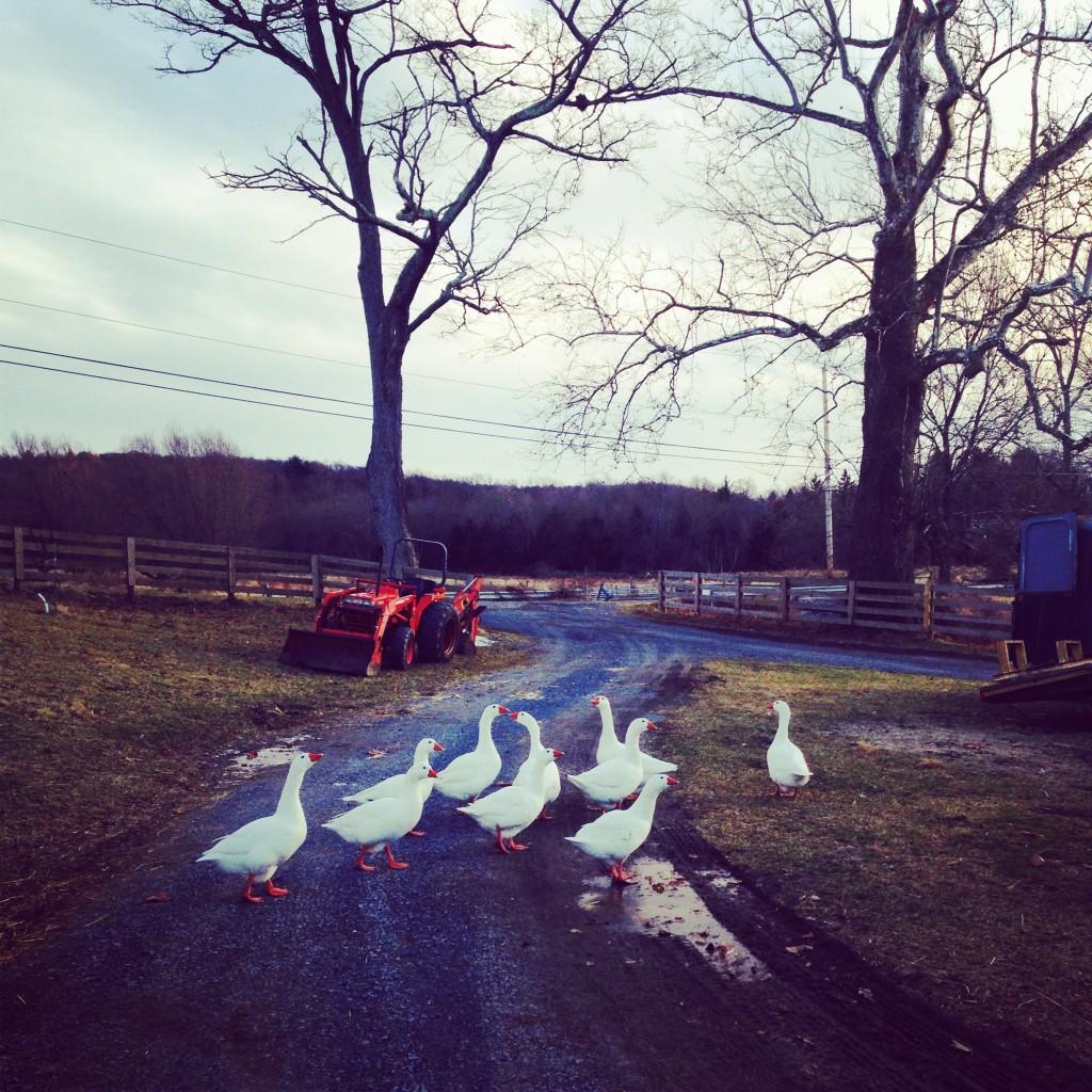 farm14
