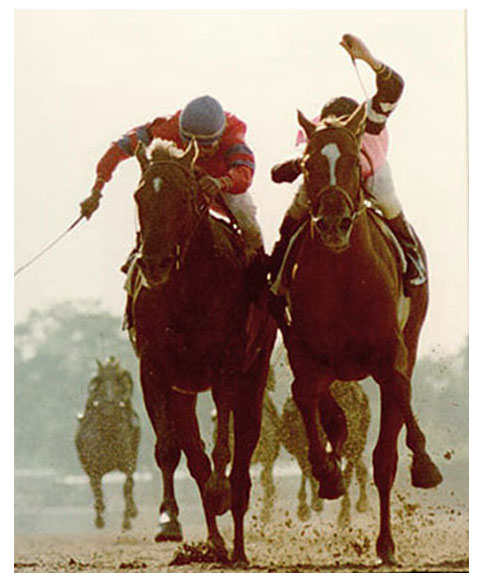 Alydar and Affirmed
