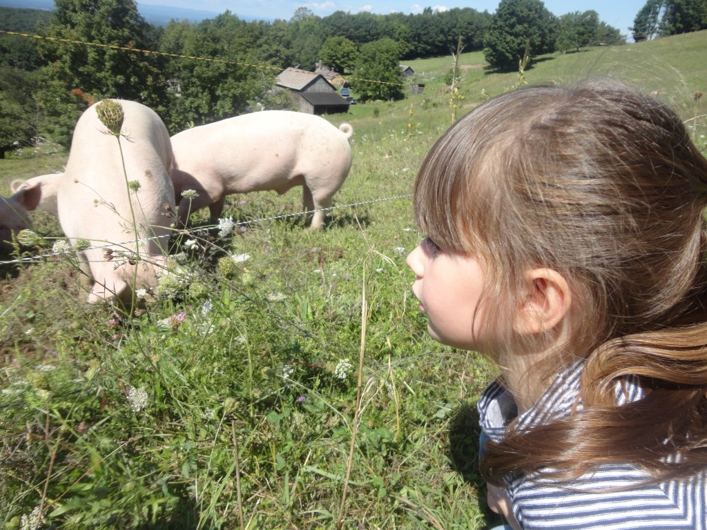 Levy at Lewis Waite Farm