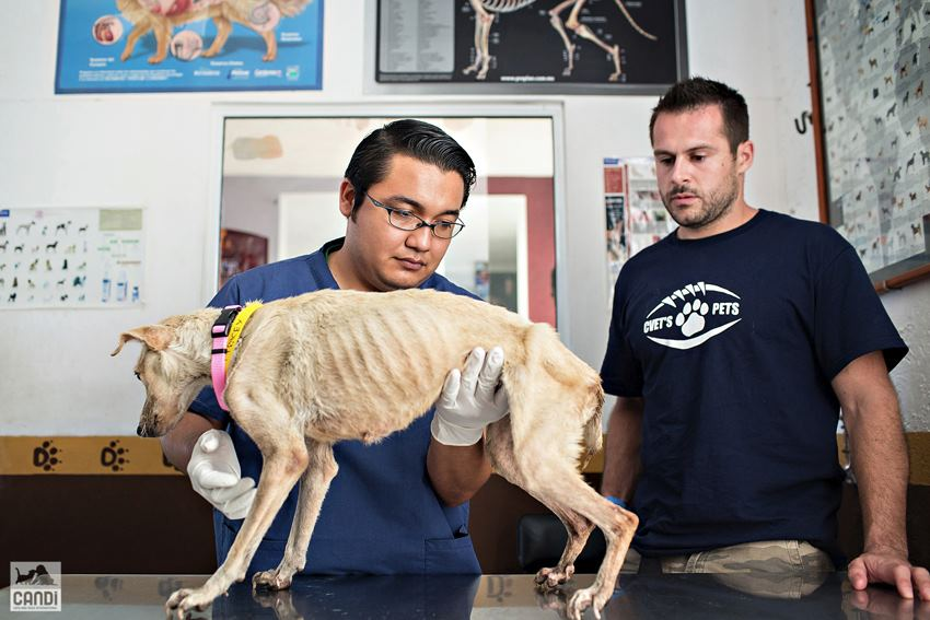 Luna with veterinarian and humane partner, Arturo Di and Canadian Football League player, Ian
