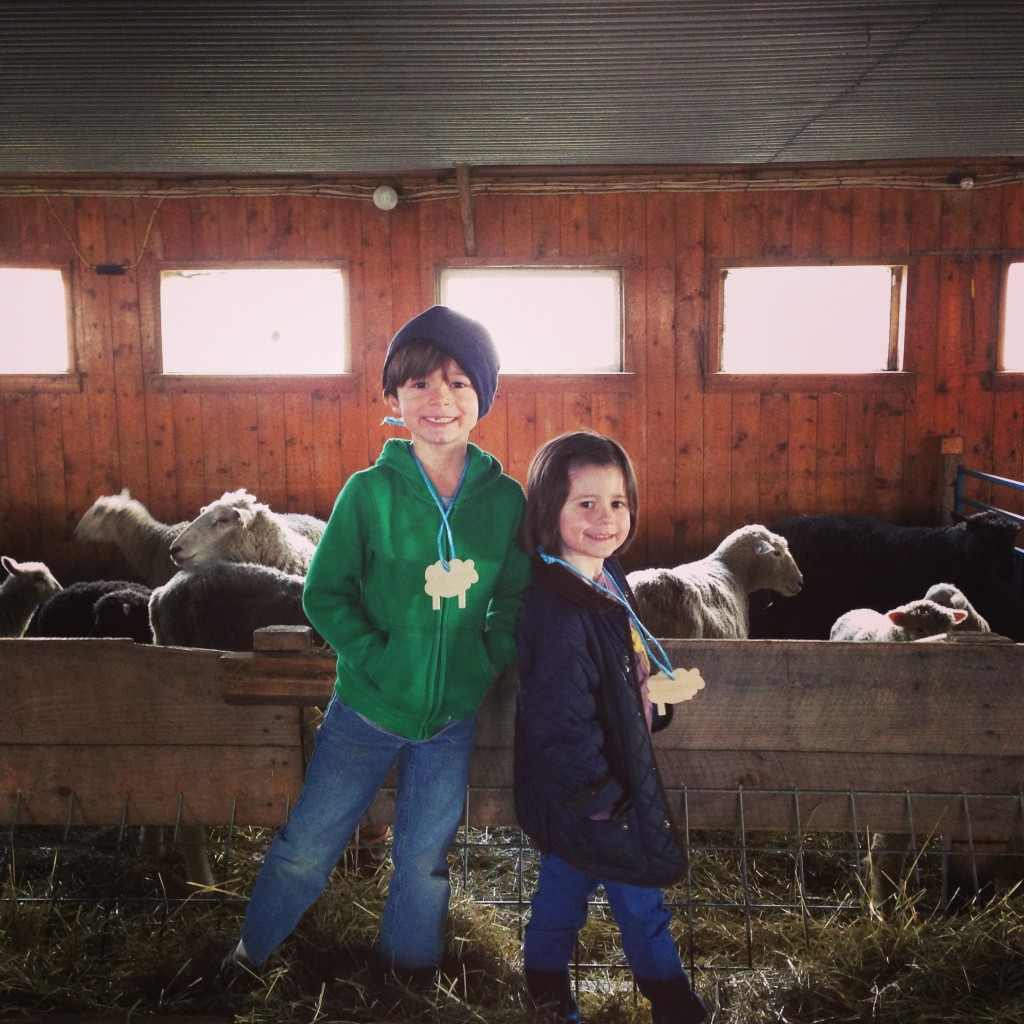 sheep91