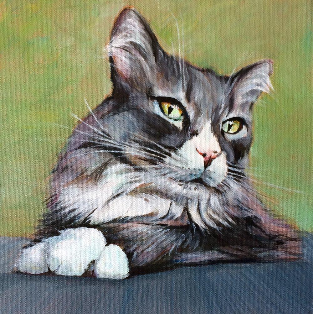 greycat2.jpg