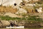 Revolution11-action-Afron-freshwater-deer-barrett-thumb150.jpg