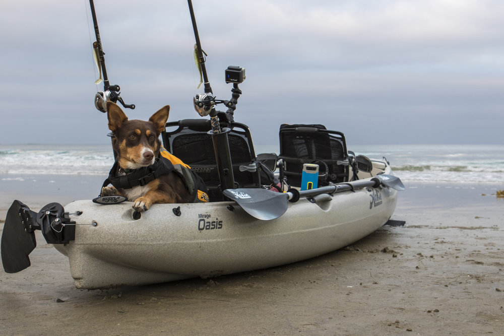 Oasis_action_fishing_beach_dog_roo_Ocean.jpg