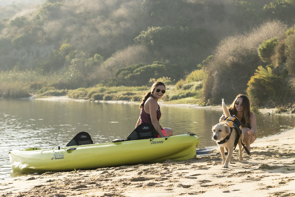 Odyssey_action_beach_seagrass_lagoon_dog_females.jpg