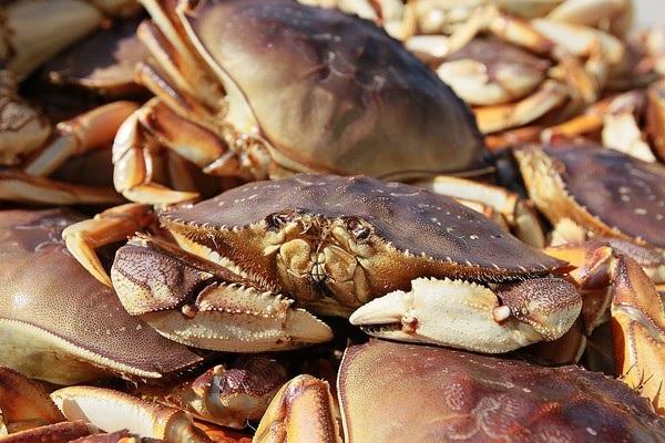 20180117 Crab article pic.jpg