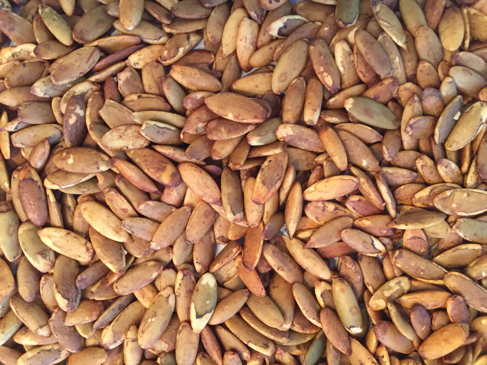 Copy-of-Tamari-Roasted-Pumpkin-Seeds_Close-up_KSRice_rotated.jpg