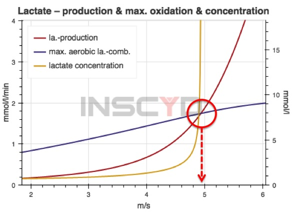 Example of the detection of the anaerobic threshold in running: INSCYD determines lactate production (red curve) and maximum aerobic lactate combustion (blue curve) separately. The crossing point of lactate production and maximum possible aerobic lactate combustion determines the anaerobic threshold.