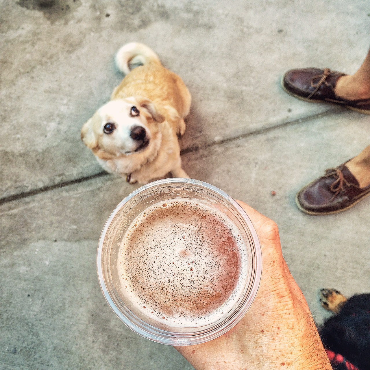 My pooch, Sammy Bernstein, and a nicely hopped-up Threes IPA
