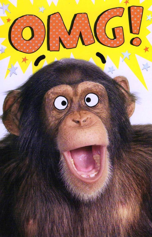 omg chimp