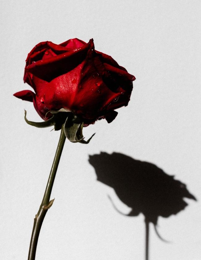 flowers-1736.jpg