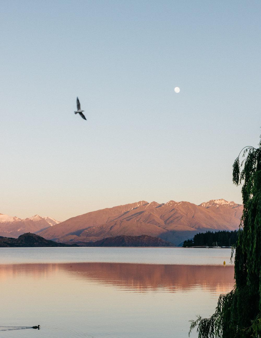 NZ-1234.jpg
