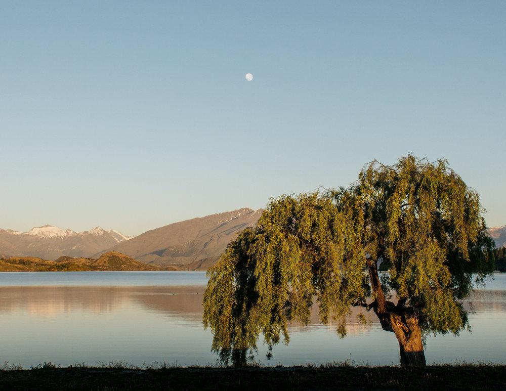 NZ-1331.jpg